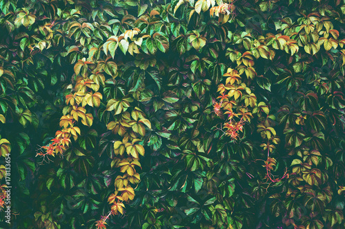 Nature background.Tree branchs,leaves and vegetation Poster