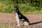dog watch in to the sun - 178137666