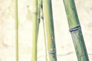 Bamboo branches against old weathered wall, shallow depth of field, color toning applied.