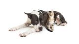 Big Dog Lying With Little Kitten - 178149832