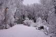 Winter Trail, Anchorage Alaska