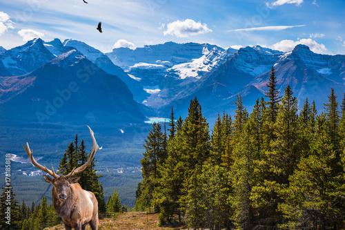 Fotobehang Hert The noble deer with branched horns