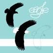 eagle vector illustration style flat black silhouette line