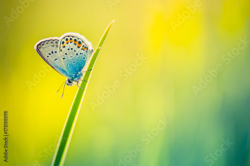 Foto op Plexiglas Oranje Nature background concept. Beautiful summer nature meadow background. Flowering green meadow on spring sunset light. Bright summer spring nature banner design. Inspirational nature closeup meadow.