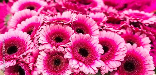 Fotobehang Gerbera bouquets de fleurs
