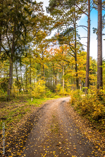 Papiers peints Miel Rural road through forest in autumn, scenic landscape of trees with yellow orange leaves