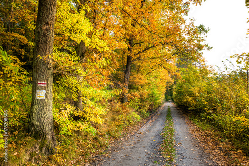 Fotobehang Oranje Polish forest in autumn, scenic landscape with path between trees with golden colors of fall