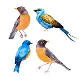 Watercolor bird vector set
