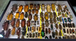 Collection of beetle with pin.Insect collection of entomologist. A rare collection of beetles in a showcase collector.