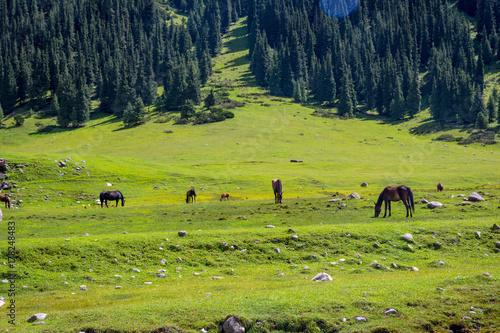 Foto op Plexiglas Pistache Horses by the river, Kyrgyzstan