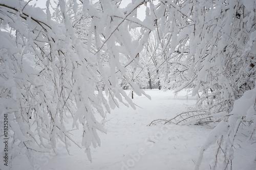 Fotobehang Donkergrijs Winter landscape in the park with details