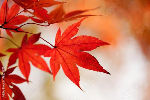 Tuinposter Rood 紅葉