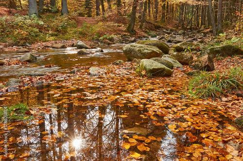 Fotobehang Betoverde Bos Ilsefälle im Herbst im Harz