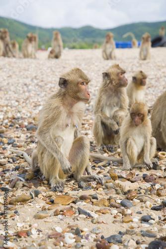 Aluminium Aap Monkey island. Thailand. Monkey looking into the distance.