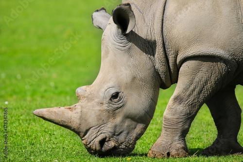 Aluminium Neushoorn Rhinocerous