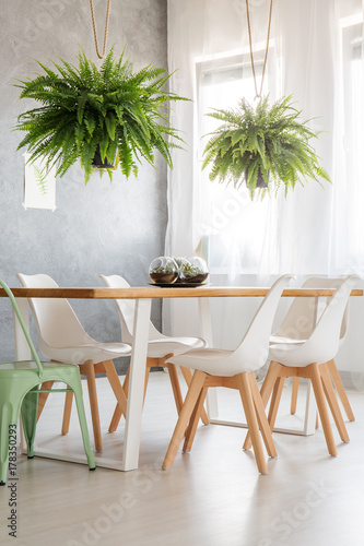 Ferns above dining wooden table - 178350293
