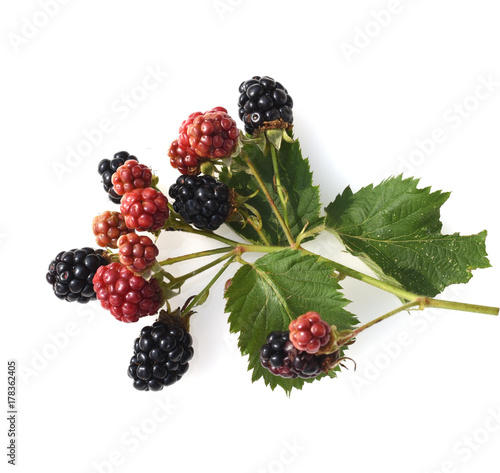 Leinwanddruck Bild Brombeeren, Rubus, fructicosa