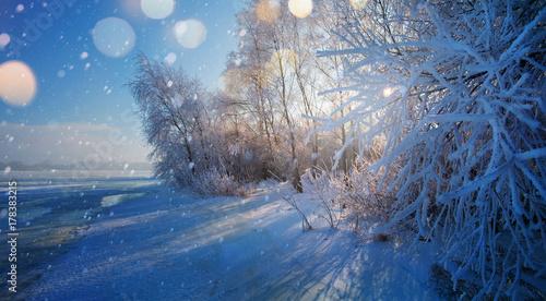 Aluminium Landschappen Christmas background with snowy fir trees