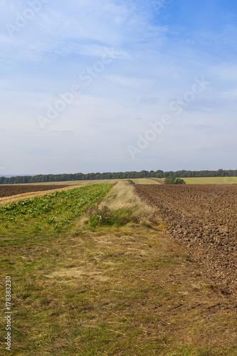 Foto op Plexiglas Blauwe hemel agricultural scenery