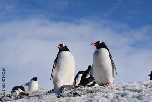 Fotobehang Pinguin paisajes antarticos