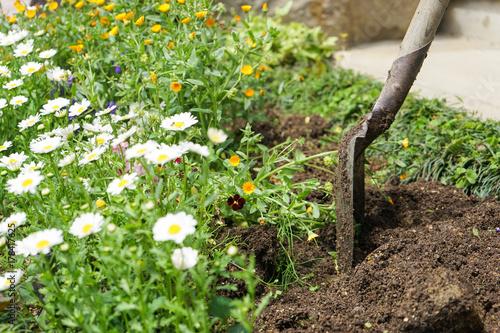 Foto op Canvas Azalea gardening