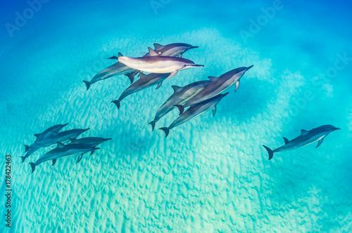 Aluminium Dolfijn Dolphin Pod