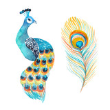 Watercolor peacock and feather isolated on the white background. - 178425253