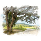 Country road and big rain tree with rice field and mountain background. Watercolor painting (retouch). - 178431899