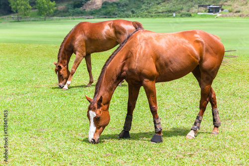 Horses Two Field Outdoors Poster