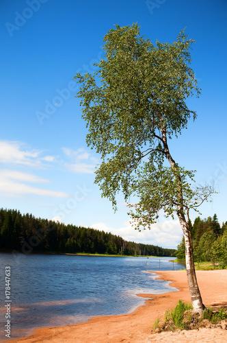 Papiers peints Bosquet de bouleaux birch on the river bank, sand spit