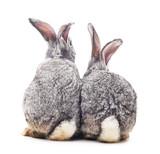 Fototapety Baby rabbits.