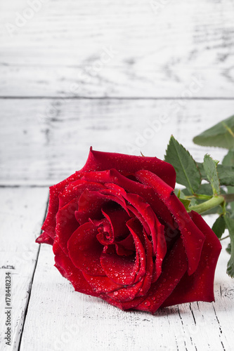 Single red rose with water drops on white wooden background