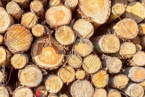 Papiers peints Texture de bois de chauffage Holz Querschnitt Baum Bäume Stapel