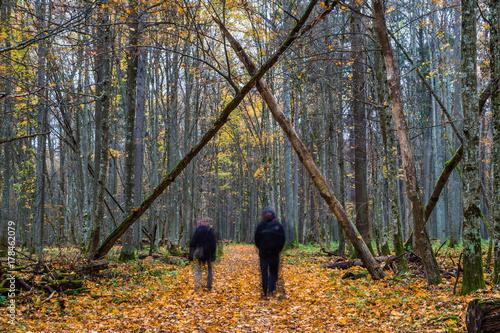 Aluminium Weg in bos Białowieża-Urwald im Herbst