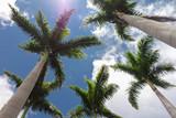 arbres exotiques - 178472288
