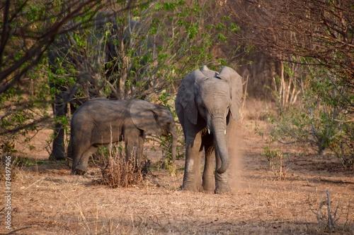 Elefantenbabys Poster