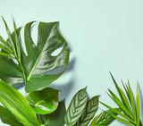 Various tropical leaves - 178503075