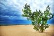 Beautiful green tree on the beach of Michigan lake with cloudy sky