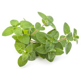 Oregano or marjoram leaves isolated on white background cutout - 178506821