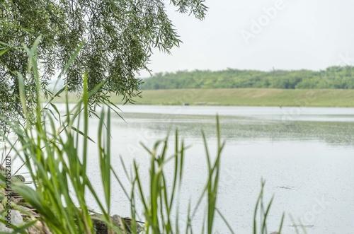 Papiers peints Olive willow tree on lake