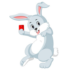 photo cute rabbit on white background
