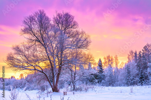 Fotobehang Lichtroze winter landscape with forest, trees and sunrise