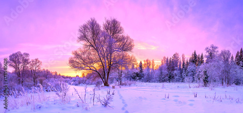 Aluminium Purper winter panorama landscape with forest, trees covered snow and sunrise.