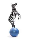 African zebra balancing on a ball. Funny animals isolated on white background. - 178540869