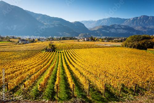 Fotobehang Wijngaard Vineyards in Trento in autumn