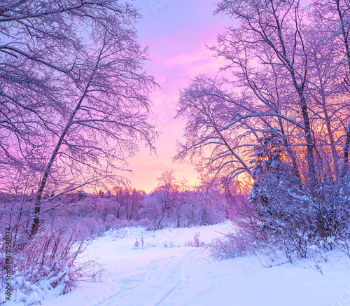 Aluminium Purper winter panorama landscape with forest, trees covered snow and sunrise