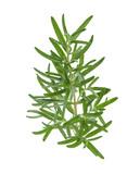 Rosemary isolated on white background - 178551200