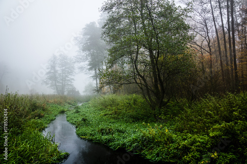 Fototapeta Nature Reserve of the Royal Source in the Kozienice Forest, Mazovia, Poland