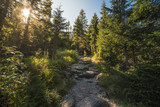 Hiking Trail in the Forest with Sun Shining through the Trees - 178563870