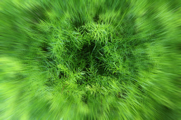 Blur zoom in to top wood of fern